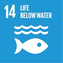 14 Life Bellow Water